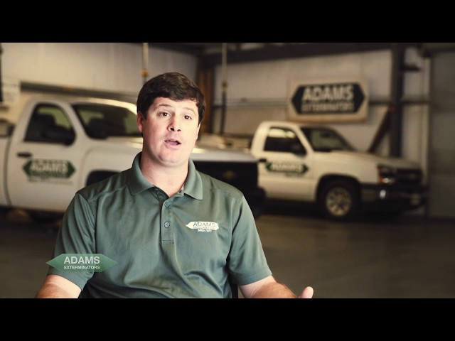 Adams Exterminators - Competitive Price