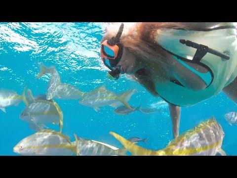 Snorkel Grand Turk with Mango Maddy