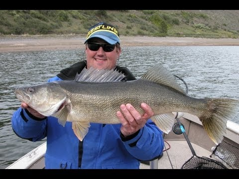Drop Shotting River Walleye!