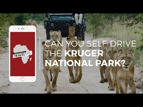 Can you self-drive in the Kruger National Park? Rhino Africa's Travel Tips