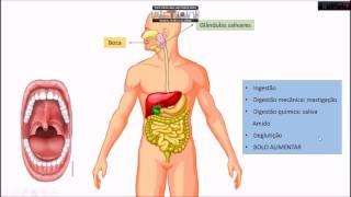 Circulatório sistema do parte órgão faz qual não