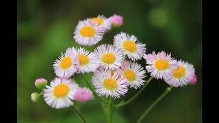 横浜、東武動物公園、花々の写真とコラボしました。懐かしい曲を聴きな...
