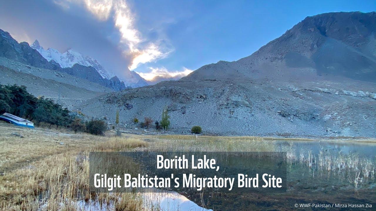 Borith Lake, Gilgit Baltistan's Migratory Bird Site