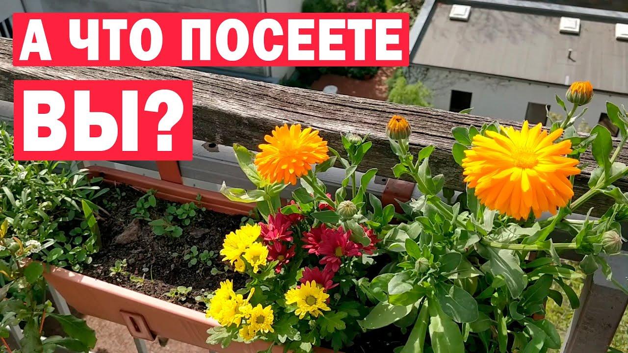 Что посадить на балконе? Обзор