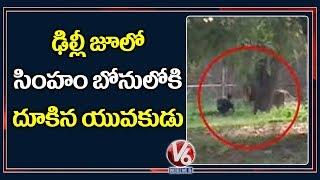 Mentally Retarded Man Jumps Inside Lion Enclosure In Delhi Zoo  Telugu