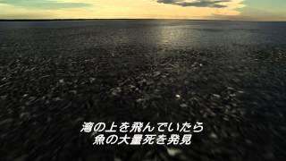 映画『ザ・ベイ』予告編