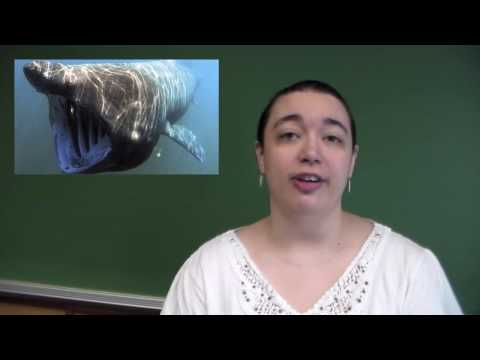 carbon dating sharks