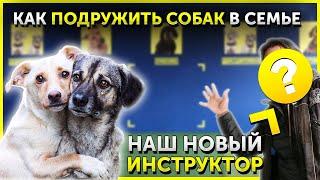 Как подружить собак друг с другом | Вторая собака в доме | Что делать, когда собаки дерутся | DRED