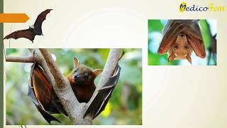 Nipah virus Highlights and Important information