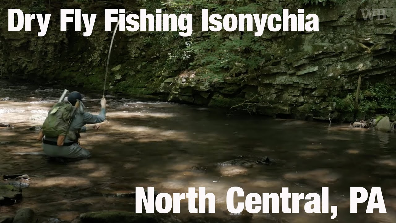 WB - Brushleg, Iso Dry Fly Takes, Ep. 4, Northern PA - June '20