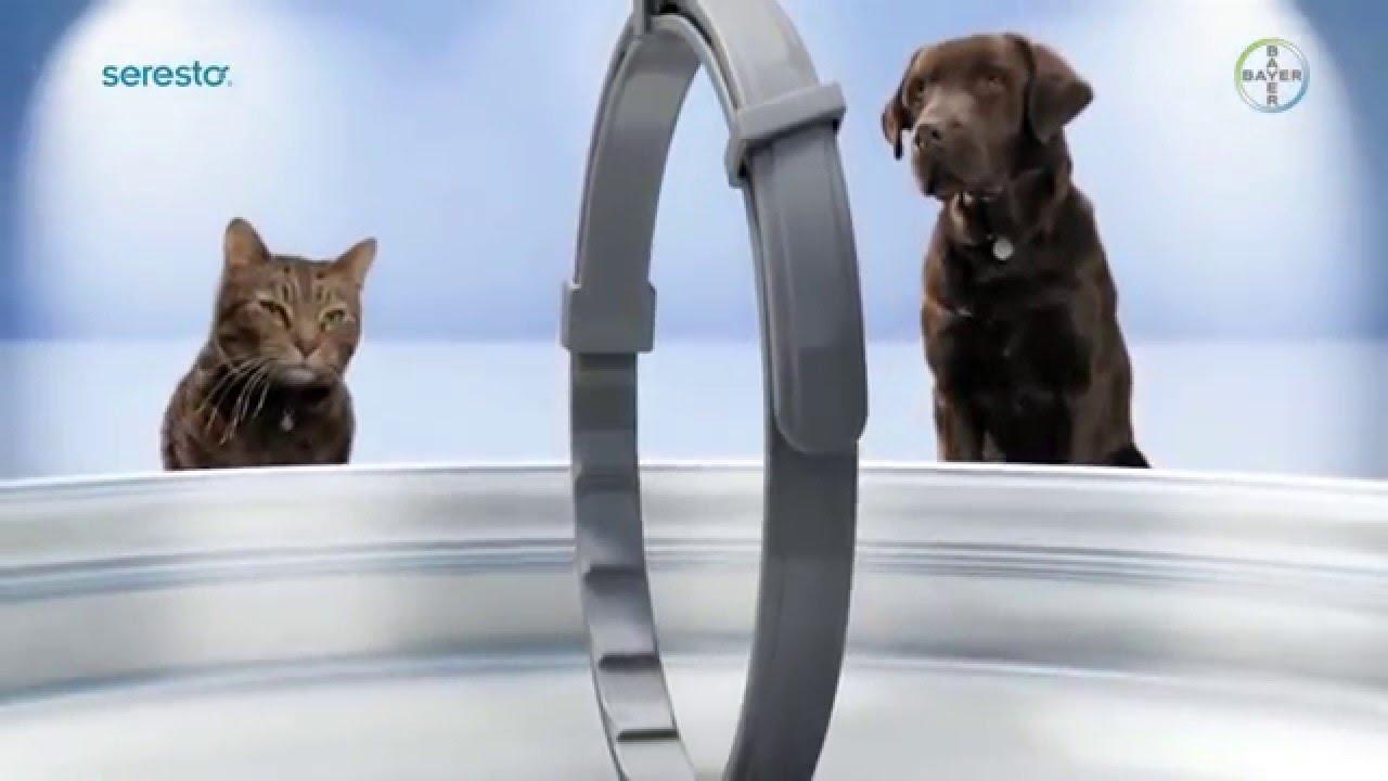 Collar Seresto® Collar Anti,pulgas, Garrapatas, Larvas y Piojos , Perros y Gatos , YouTube