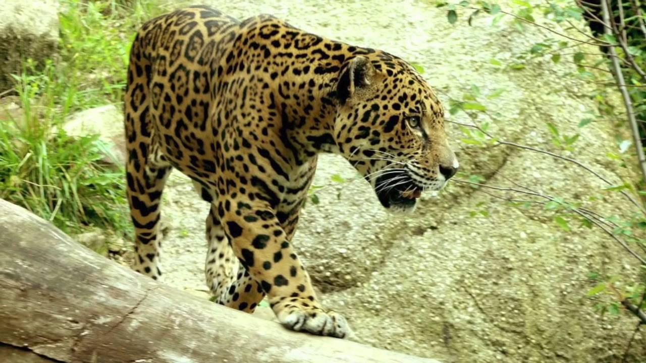 Rainforest Biome Animals