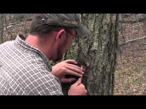 how-to-fill-your-canteen-from-a-tree