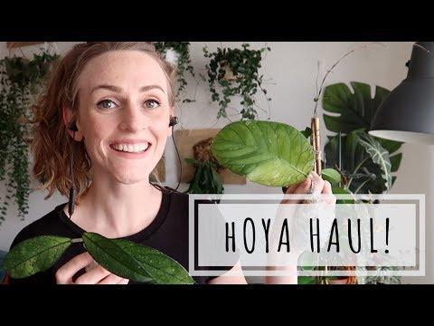 Rare Hoya Haul! Hoyamygosh I need a glass of wine.
