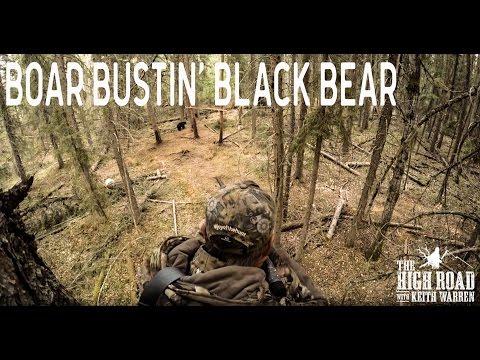 Boar Bustin' Black Bears | Alberta Bear Hunting