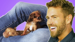 "Nick Viall From ""The Bachelor"" Plays With Puppies (While Answering Fan Questions)"