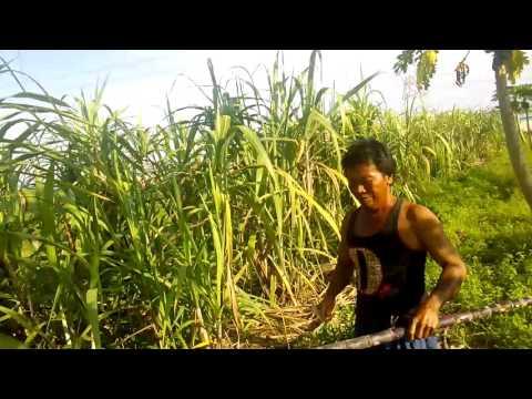 Malaysia vegetable farm visit(3)
