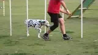 Terry & Harley ( Practice Run )