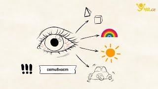 Уча.се - Зрителна сетивна система - 8. клас