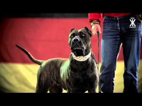 Swiss & Die Andern - Schwarz Rot Braun