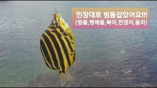포항 민장대 바다낚시 범돔 HIT!!