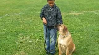 South African Boerboel Dog Training