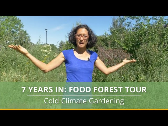 Cold Climate Food Forest Tour: 7 Years Later