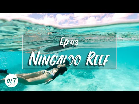 The BEST Snorkelling In Australia - Cape Range National Park & Exmouth - E43