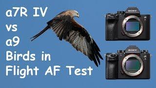 Sony a7R IV vs a9 Birds in Flight Autofocus Comparison