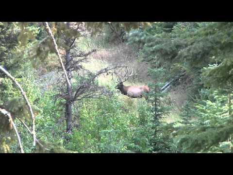 Idaho Elk Hunting | Mountain View Elk