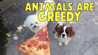 Animals Are Greedy || Funny Videos