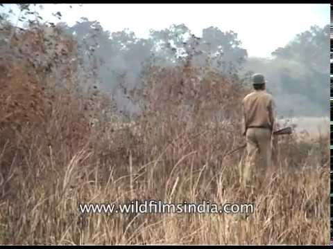 Armed rangers protect the residents Kaziranga National Park from poaching