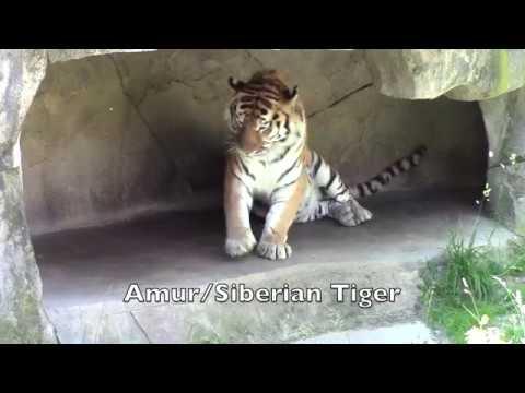 Columbus Zoo Asian Quest