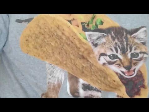 Kitten Close Up 2017-09-22