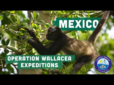 Operation Wallacea - Mexico