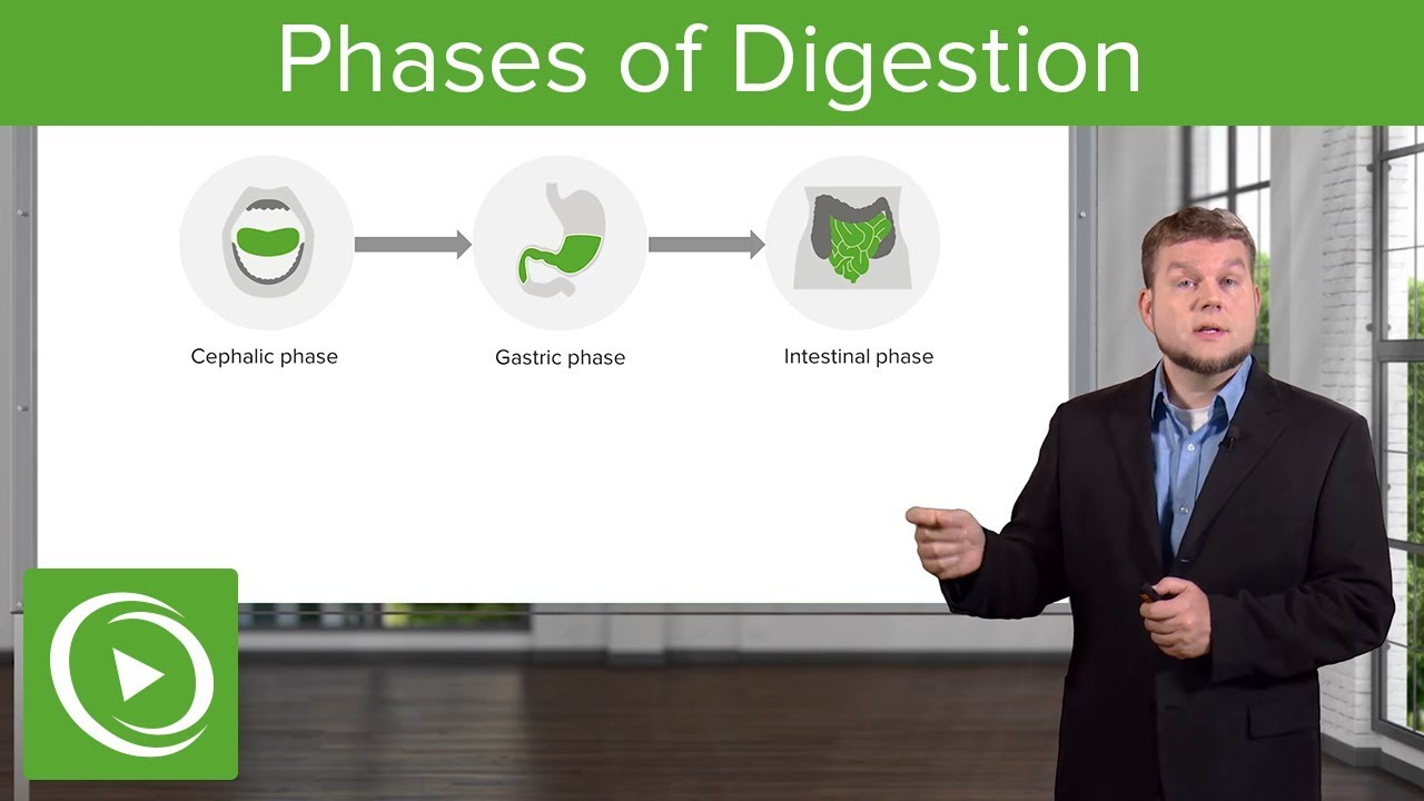 Phases of Digestion – Gastrointestinal System | Lecturio