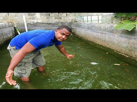 el pez tetra que crecio demasiado en el estanque