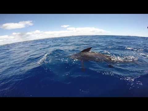 Sodwana Bay Marlin Fishing 13/01/2018