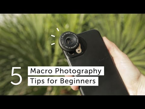 5 Macro Photography Tips For Beginners