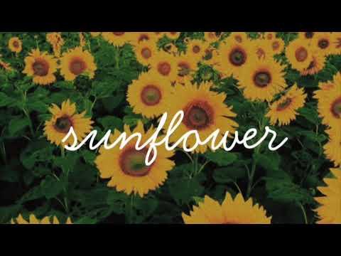 Sunflower- Sierra Burgess 1 hour loop ( rain background )