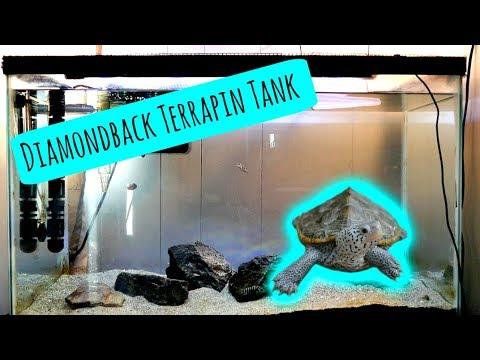 Diamondback Terrapin Enclosure Doovi
