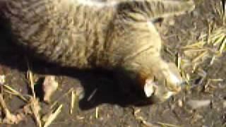 Котёнок который умеет слушать музыку!