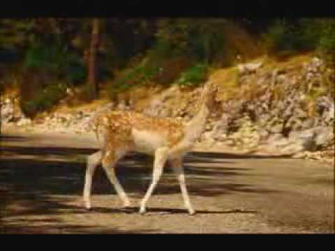 David Lynch's PS2 Commercial - Bambi
