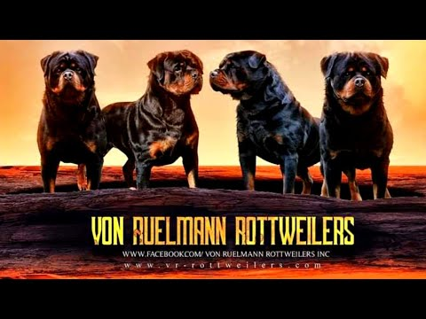 Von Ruelmann Rottweilers America | World's One Of Best Rottweiler Kennel