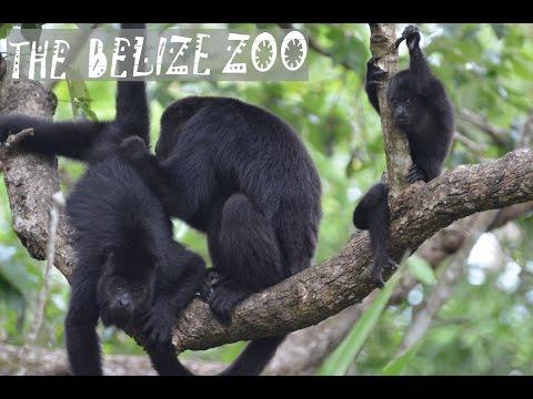 Belize Zoo Vlog