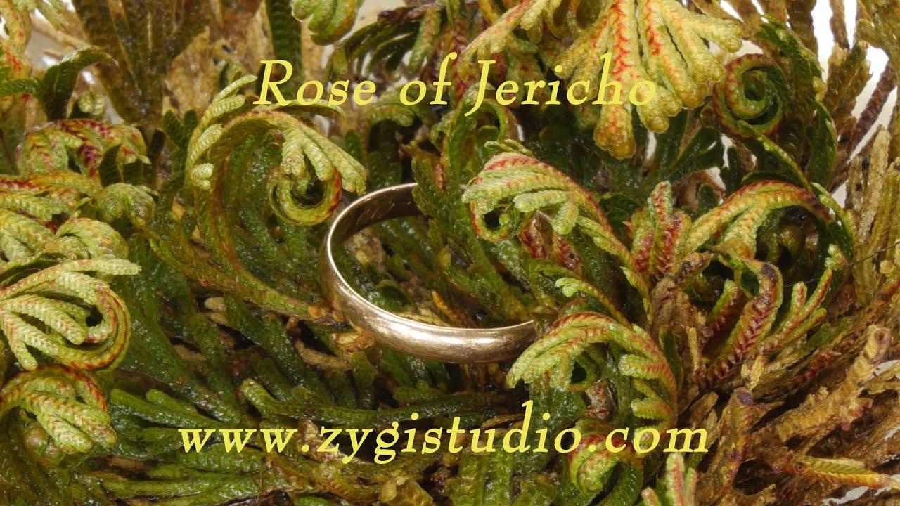 Opening Rose of Jericho (Resurrection Plant). - YouTube