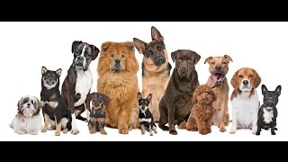 Dog Training In Montreal & Laval (positive Reinforcement)