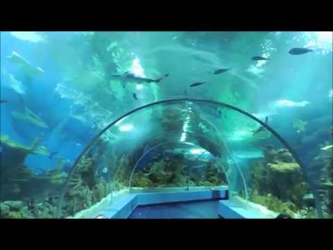 اكواريوم المتحف المائي
