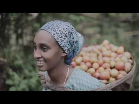 Support to Responsible Agricultural Investments Project in Ethiopia