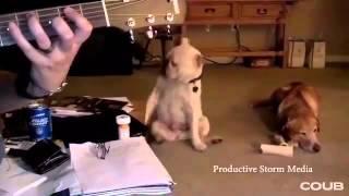 Собака рокер